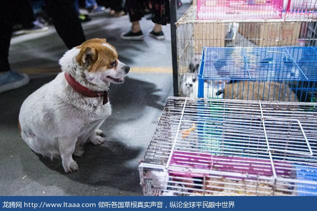 A mother's love: Le Le comes to a market in Hangzhou China to see her newborn puppies