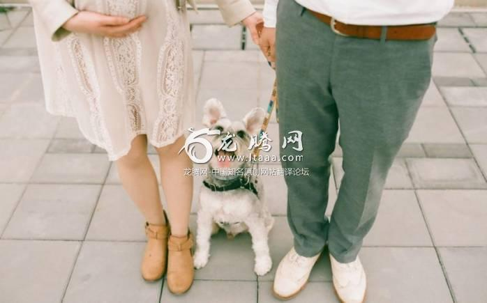 Owners'  social credit is deducted for various infractions such as walking a dog without a leash or tag and not cleaning up poo - EyeEm